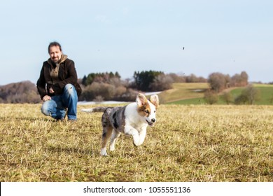 man is playing with his half breed puppy dog on a meadow, blue sky in the background