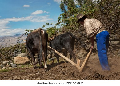 A man plowing the ground with two bulls. October 13, 2012, Caraz Peru.