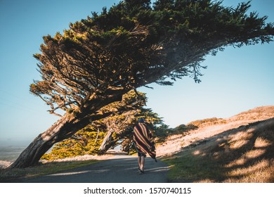 Man at the Point Reyes National Seashore with Cypress bendover tree white hut