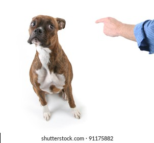 Man Pointing finger at Boxer Dog with Worried Look on Face