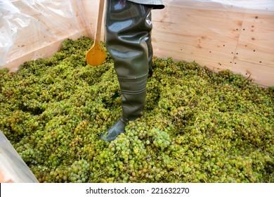 a man pounding grapes in a farm