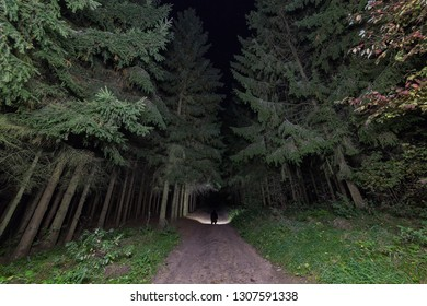 Man with powerful flashlight deep in the fir forest.