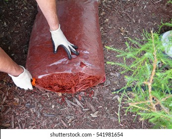 A man prepares to mulch a flower garden to conserve moisture, control weeds, and insulate plants. Wearing gloves, he's opening a bag of cypress mulch.