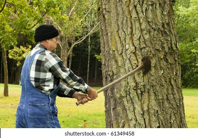man preparing to chop down a tree with an old double blade axe