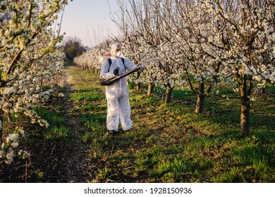 Man in protective suit and mask walking trough orchard with pollinator machine on his backs and spraying trees with pesticides.