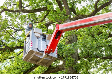 Man in protective working clothes removing oak procession caterpillars in aerial platform up in oak tree