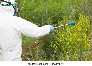 Man in protective workwear spraying herbicide on ragweed