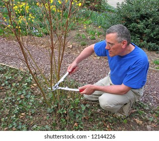 Man pruning red twig dogwood bush