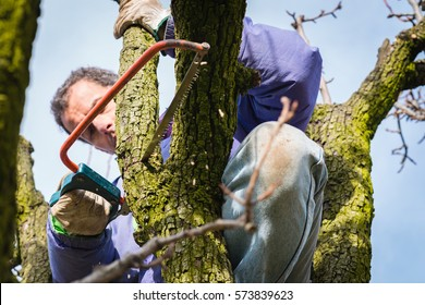 Man pruning tree brunch with pruning saw