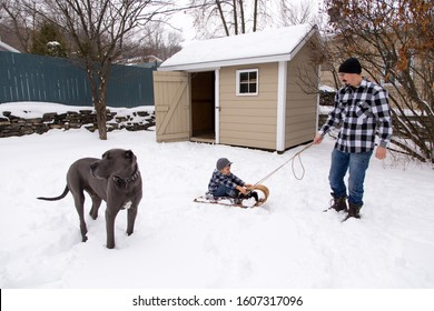 Man pulling his young son in a vintage sled next to very tall and muscular male blue great Dane standing in winter garden