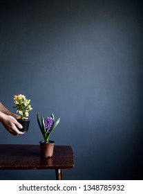 Man put flowers in pots on the brown retro table on grey wall background with free space for text