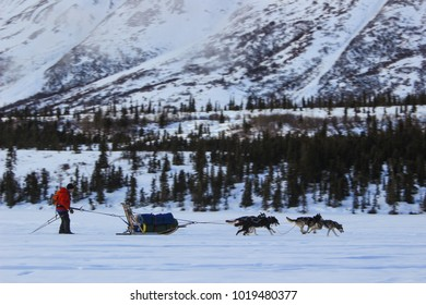 A man with a red jacket on, skijoring with four huskies and a sled over a frozen lake in Alaska.