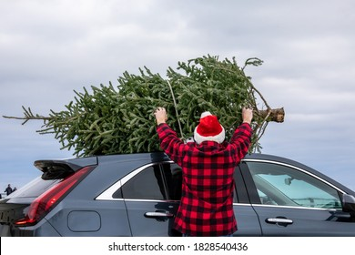 A man in a red shirt and a Santa Claus hat tying a Christmas tree to the roof of the car to bring it home
