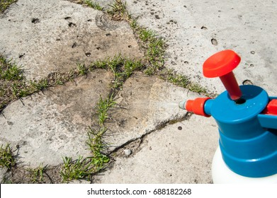 Man removes weeds from the sidewalk / cutting out weeds