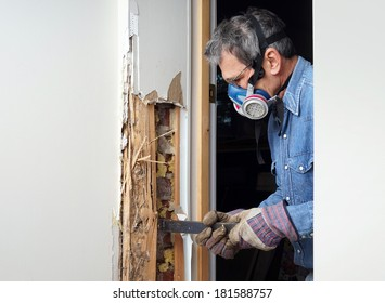 Man removing wood damaged by termite infestation in house.