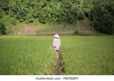 A man in rice farm