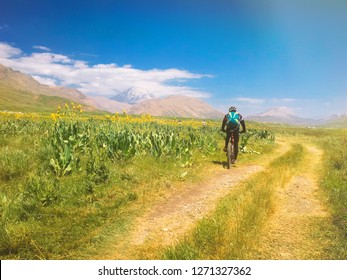 A man rides a bike. Grassy plain with the yellow flowers. Mount Damavand is in the background.