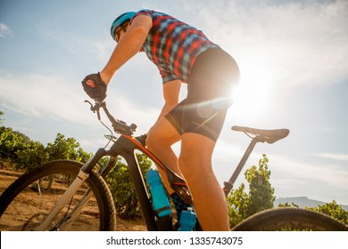 A man rides his mountain bike through a vineyard in the wine lands.