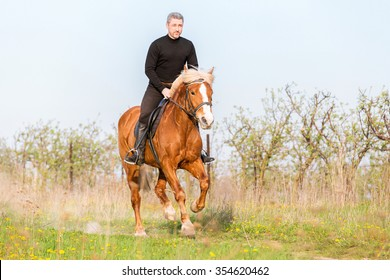 Man riding gallop horse in summer meadow.