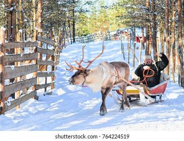Man riding Reindeer sled in winter Rovaniemi, Lapland, Finland