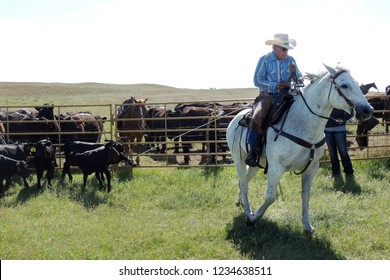 man roping calve at a branding in the sand hills