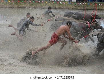 man is running in a buffalo run tradition in Chonburi, Thailand.