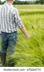 Man running his hand through wheat plants in a huge wheat field