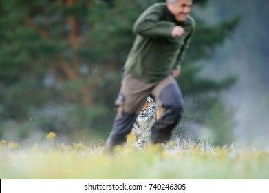 Man running out before tiger