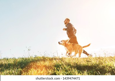 Man runs with his beagle dog. Morning Canicross exercise