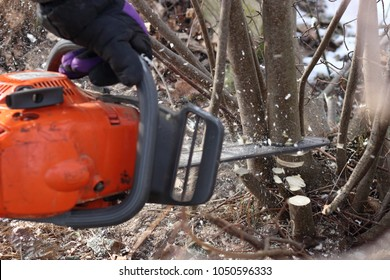 A man saws a tree with an orange chain saw for gasoline to clean the old overgrown fence. He lopping trees and bushes from the perimeter fence in winter to make new wire mesh in spring.