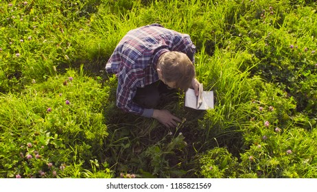 The man scientist ecologist sitting on the meadow and exploring plants. Field work