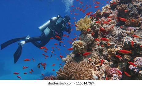 Man scuba diver admiring beautiful colorful coral reef