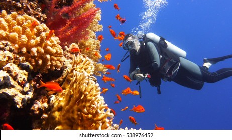 Man scuba diver watching beautiful colorful coral reef with shoal of red fish