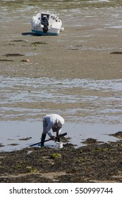 Man searching for oysters in water on the seashore, boat in background.