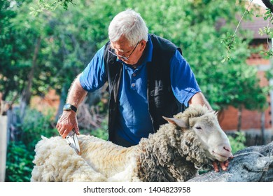 Man shearing a sheep in a green field on a sunny day