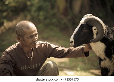A man with the sheep