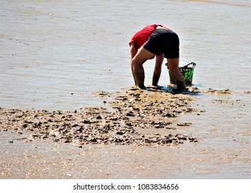 man shellfishers, seafood seekers, collecting seafood, in the river Guadalquivir,   in search of clams, cockles in the mud. hard work, miserable, exhausting,