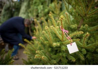 Man shopping for christmas tree.
