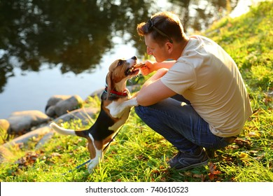 Man sit on squat on haunches at green bank of river, play with young beagle dog. Owner tease doggy with wooden stick, pet stand on hind legs and gnaw twig