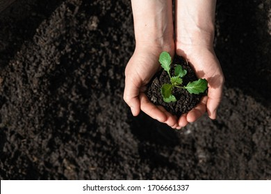 A man sits a ready sprout in the ground. Restoration of ecology. New world. Top view.
