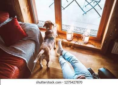 Man sitting in comfortable chair opposite big window in cozy country home and his beagle dog watching in wide window. Countryside vacation with pets concept image.