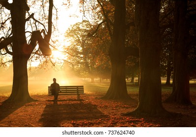 Man sitting on a bench in a park on a sunny and foggy autumn morning.