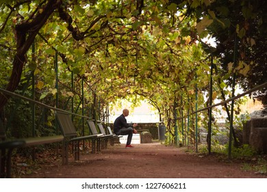 Man sitting in a tunnel of tree's on an autumn day.