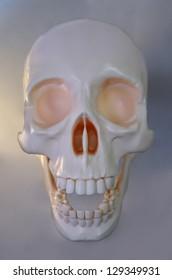 Man skeleton skull