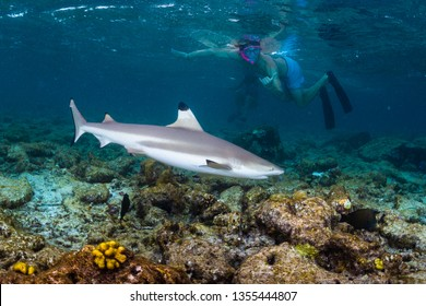 Man snorkeling with the blacktip reef shark (Carcharhinus melanopterus) in tropical sea