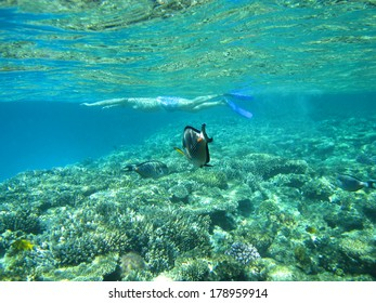 A man snorkeling with the tropical fish in underwater of Red Sea