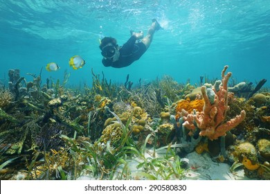 Man snorkeling underwater looks reef fish over a lush seabed with colorful marine life composed by corals and sponges in the Caribbean sea
