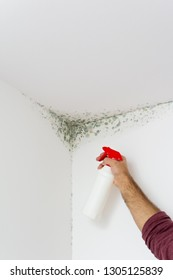 Man spraying interior wall mold. Solving mold on white wall angle by spraying it with chemical.