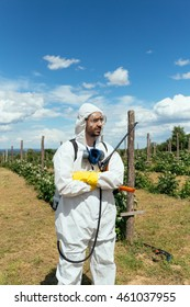 Man spraying toxic pesticides or insecticides on fruit growing plantation. Natural light on hard sunny day. Blue sky with clouds in background. Agriculture theme.