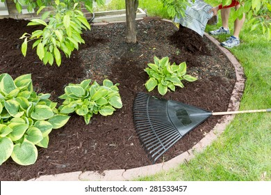 Man spreading mulch in the garden emptying a sack of organic bark onto a flowerbed to be spread with a rake, view of his feet in the back of the frame with focus to the plants in the bed